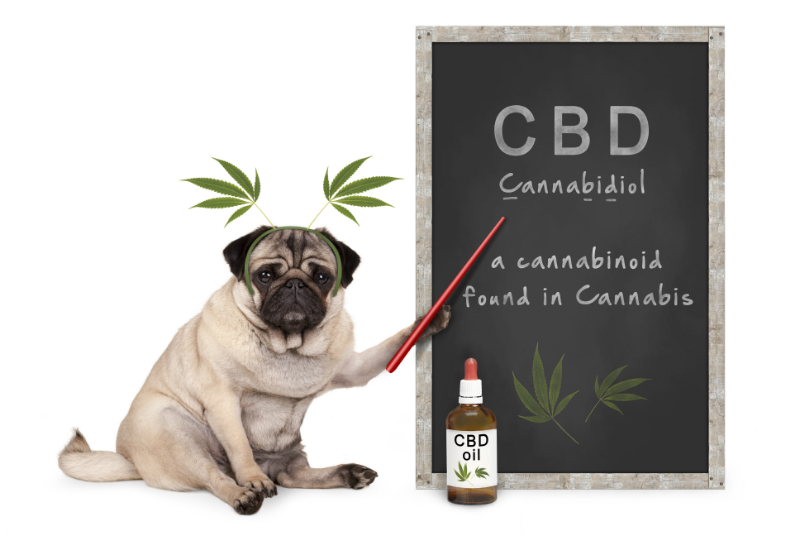 get-CBD-oil-for-your-dog